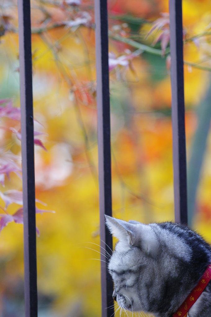 晩秋を想う