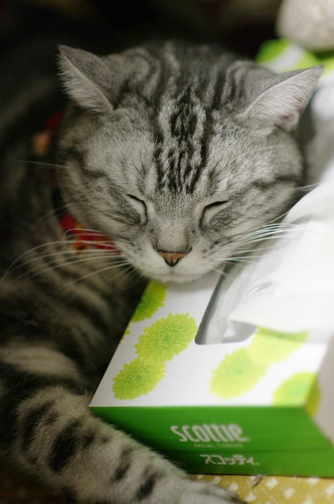 お気に入りの枕