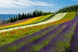 色彩の絨毯
