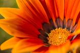 オレンジ色の誘惑