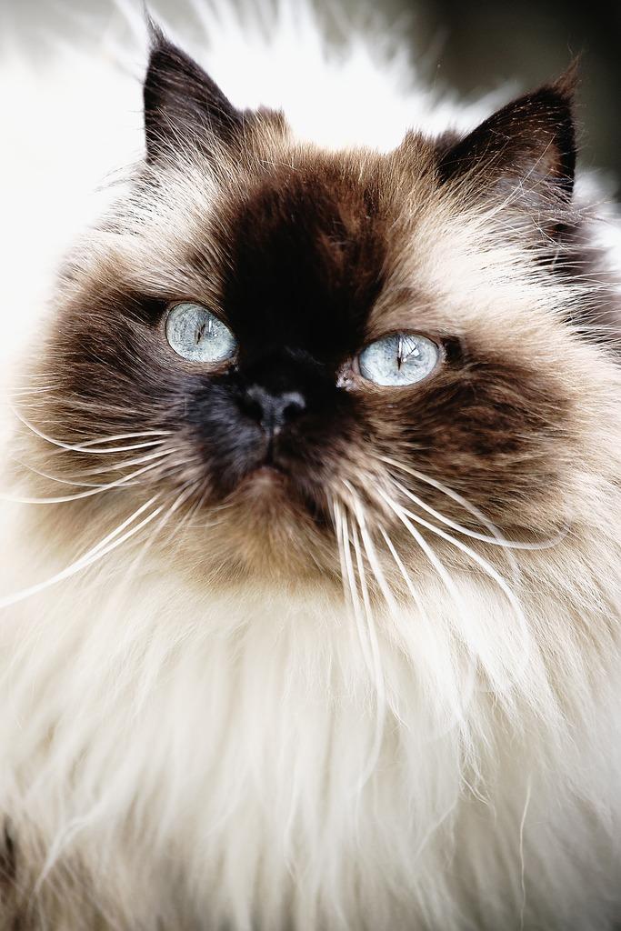 青い目の女の子