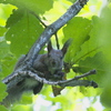 カシワの森で出会ったエゾリス