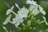 9298 白い花