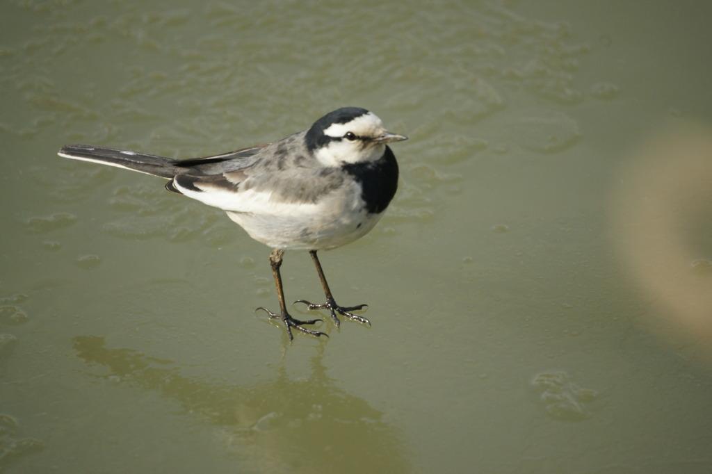 0550 氷上の鳥