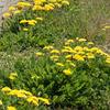 6772 真っ盛りな農道の春