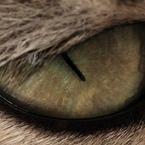 SONY DSLR-A900で撮影した動物(マスカラたっぷり)の写真(画像)