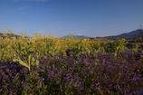 小さな花畑から望む八ヶ岳