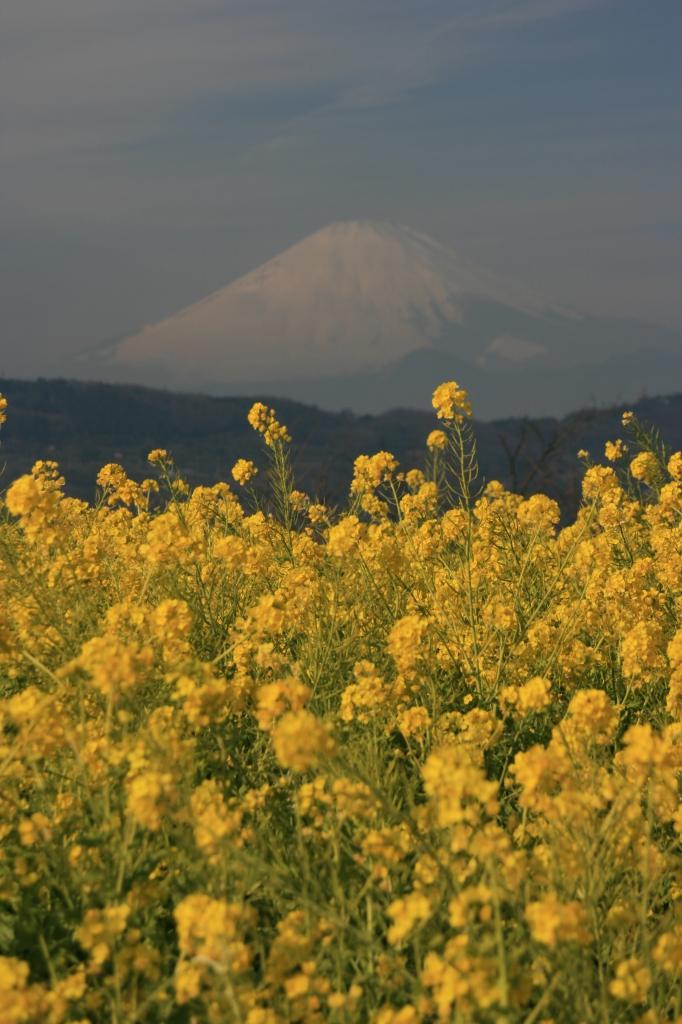 早春の富士