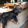 友犬「ベル」