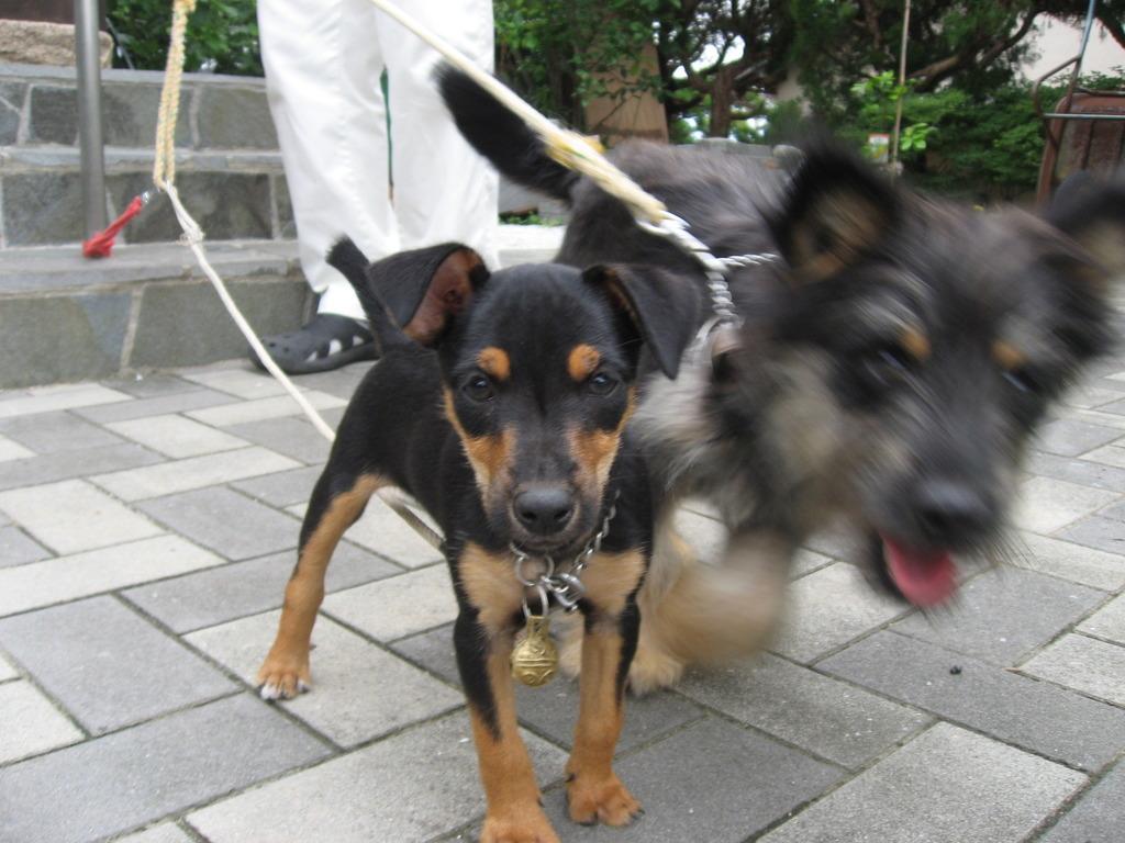 犬友のベル&リン