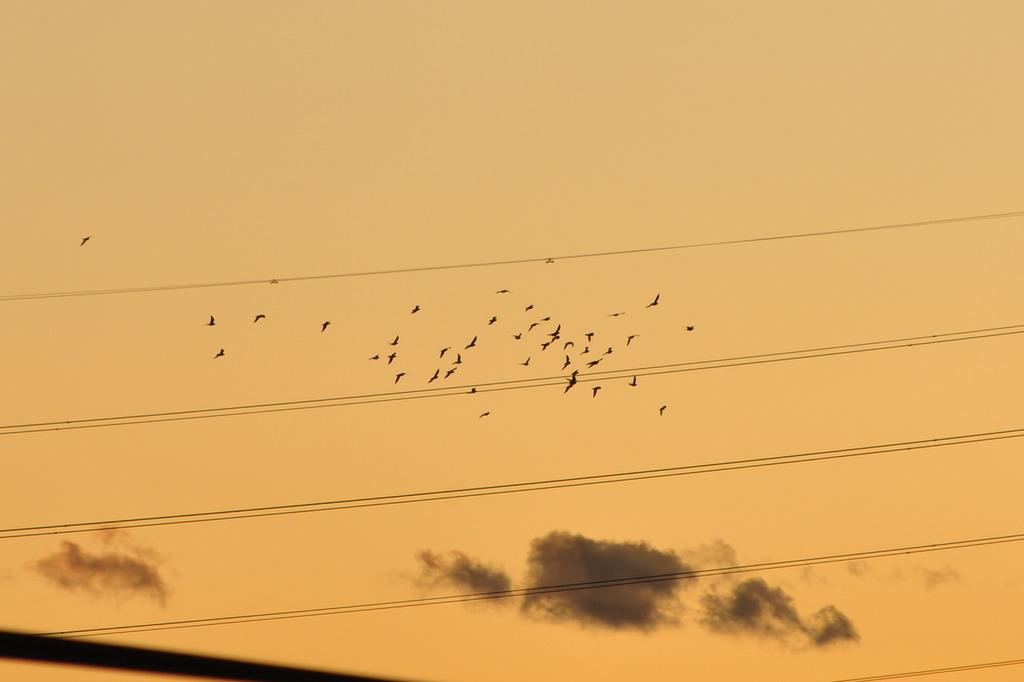 夕やけと鳥