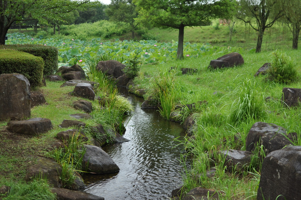 蓮池と小川