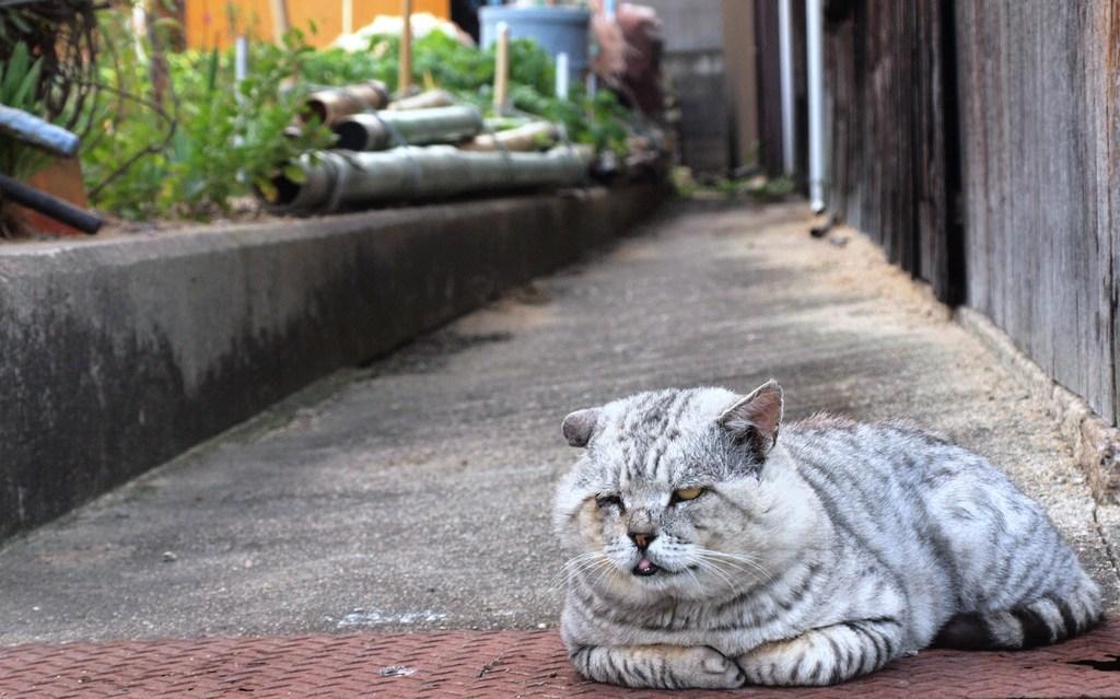豊島の猫が・・・