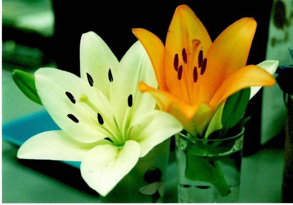 仕事場の花