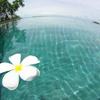 白い花 DE アジアンリゾート