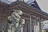 阿伎留神社の狛犬