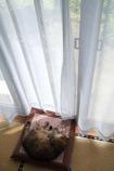 実家のネコ