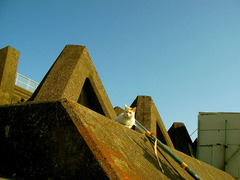 猫とテトラポット