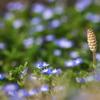畦道にも春がきた3(ツクシ)