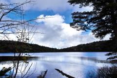 信州池巡り5(八千穂高原の白駒の池)