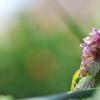 春を運ぶ野草花(ヒメオドリコソウ)