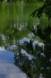 相楽園(そうらくえん)日本庭園の池面