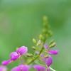 路傍に咲く野草花(アレチヌスビトハギ)