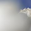 春を告げる花々(ハクモクレン2)