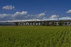 稲孫(ひこばえ)を行く新幹線(N700系とさくら)