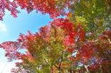 須磨離宮公園にて2(紅葉2)