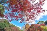 須磨離宮公園にて1(紅葉1)