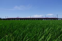 田圃を行くハローキティ新幹線1