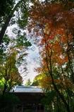 西山興隆寺の紅葉(モミジ)1