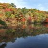 神戸市立森林植物園にて6(長谷池)