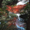 師走の紅葉1(京都府立植物園)