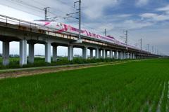 田圃を行くハローキティ新幹線2
