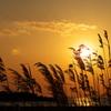 冬の播磨灘に沈む夕日17