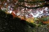 西山興隆寺の紅葉(モミジ)2