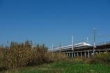 秋天を行く新幹線(N700系)