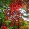 神戸市立森林植物園にて4(野鳥の森)