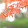紅葉も見納め(魚住住吉神社)2