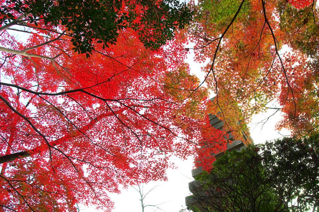 奈良は紅葉巡り5(朝護孫子寺)