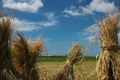 稲刈り後をかけるN700系