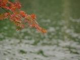 紅葉(もみじ)の紅葉(こうよう)4