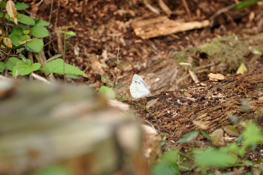 森の中の蝶