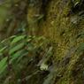 NIKON NIKON D2Hsで撮影した植物(草)の写真(画像)