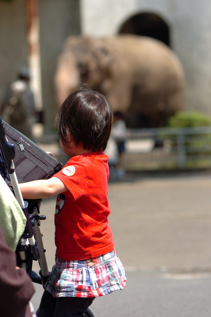象さんは好きなんだけど・・