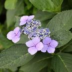 CANON Canon EOS-1Ds Mark IIIで撮影した植物(つまらない撮り方をしてしまった)の写真(画像)