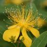 CANON Canon EOS 5Dで撮影した植物(ビヨウヤナギ)の写真(画像)