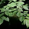 CANON Canon EOS 5Dで撮影した植物(葉っぱ)の写真(画像)